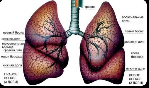 Доклад на тему заболевания легких 673